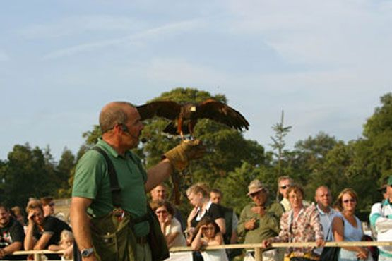 James with a Harris' Hawk